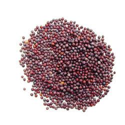 RED MUSTARD SEED - SARSO - SORSE - BEST QUALITY - 250 GM