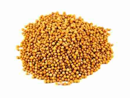 YELLOW MUSTARD SEED - SARSO - SORSE - BEST QUALITY - 250 GM