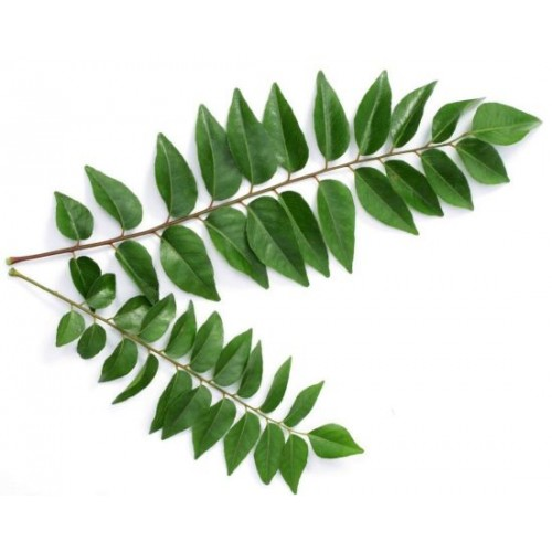 CURRY LEAVES (KADI PATA) -  1 BUNDLE