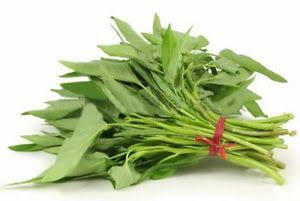WATER SPINACH - KALMI SAAG / SHAAK - 2 BUNDLE